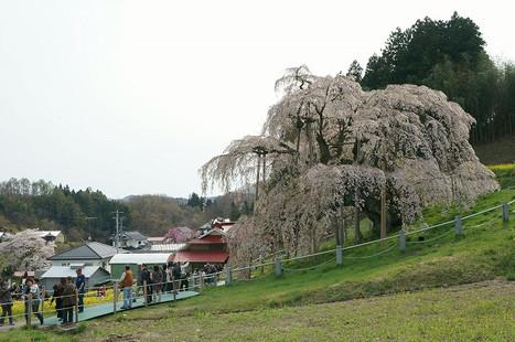 16041610takizakura2