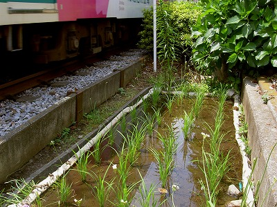 0706022ricefield
