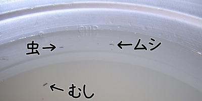 080108kokuzoumushi