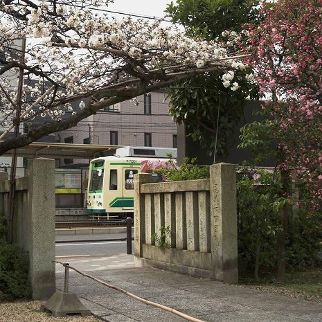 0904042kotoshinosakura