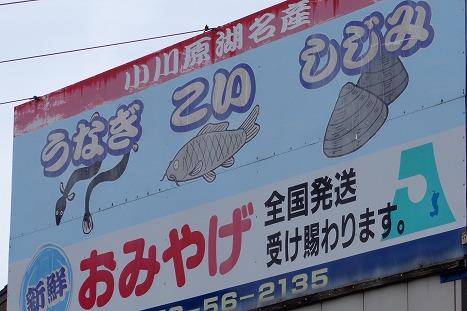 14051806fishinogawarako