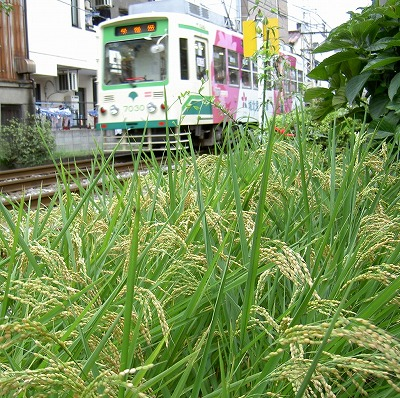 070902ricefield